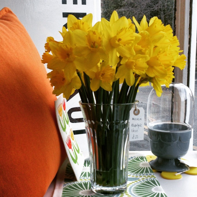 Love Daffodils!